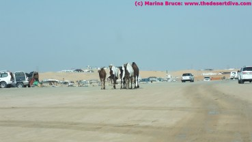 Did I say it was a camel festival?