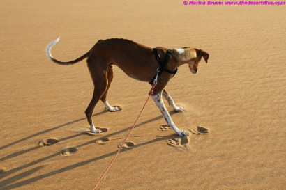 hmm - if I jump I can make pretty patterns in the sand