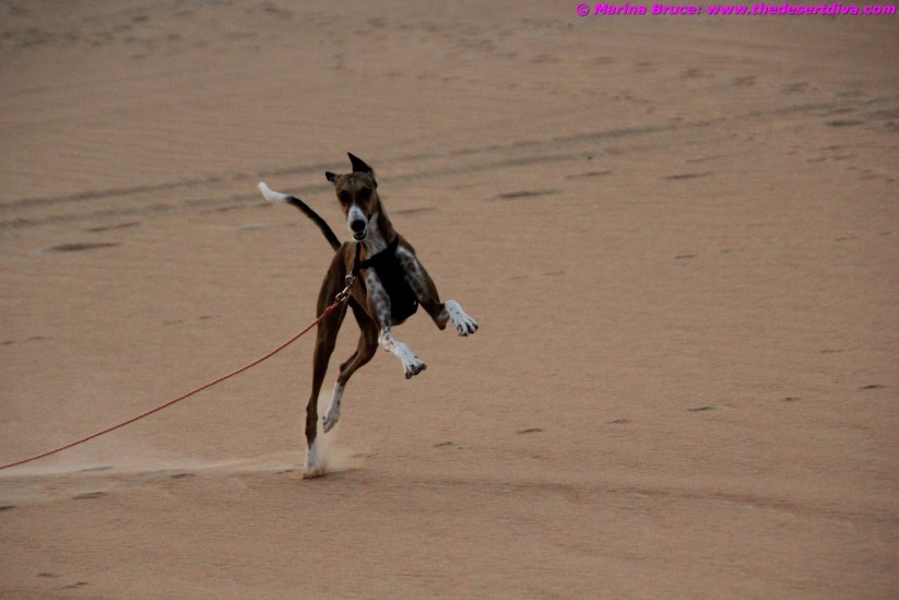 I am so happy in the desert!