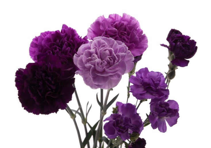 Www 3d Flower Wallpaper Com 34 Different Types Of Purple Flowers For Your Garden