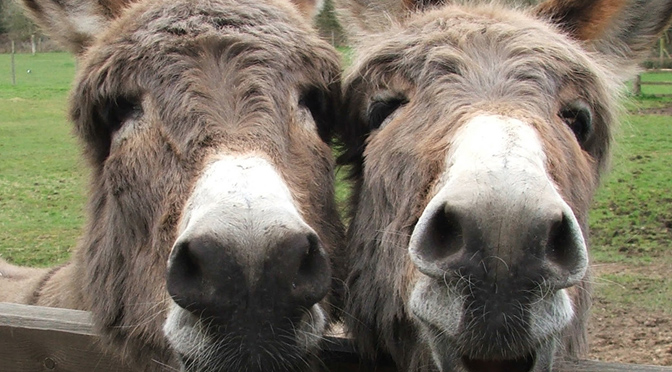 Donkey Sanctury