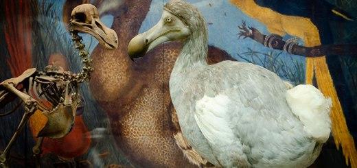 Oxford dodo