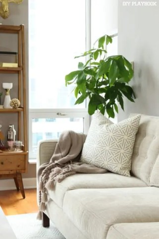 our favorite indoor plants diy playbook. Black Bedroom Furniture Sets. Home Design Ideas