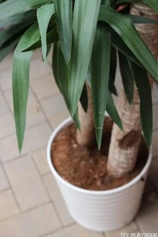 Indoor Outdoor Plant