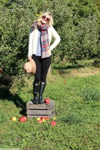 bridget fall apple orchard