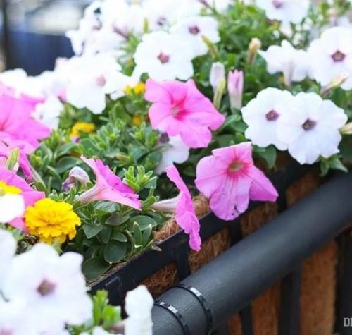 flowers-outside-balcony