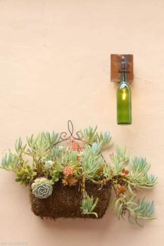 travel-carmel-succulents