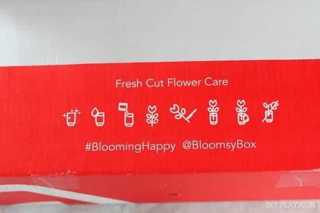 fresh-cut-flower-care