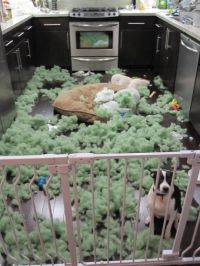 How to Make an Indestructible Dog Bed ...