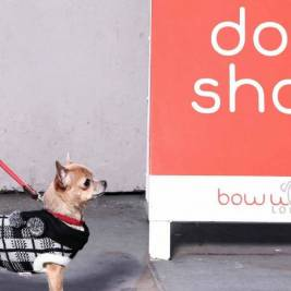 London's Most Loved Shop - Bow Wow London