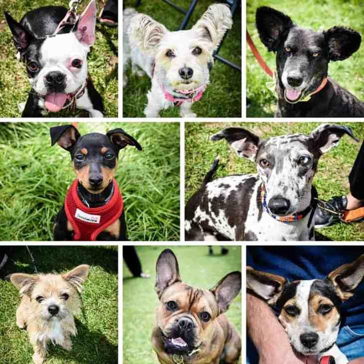 All Dogs Matter Great Hampstead Bark Off - Best Ears