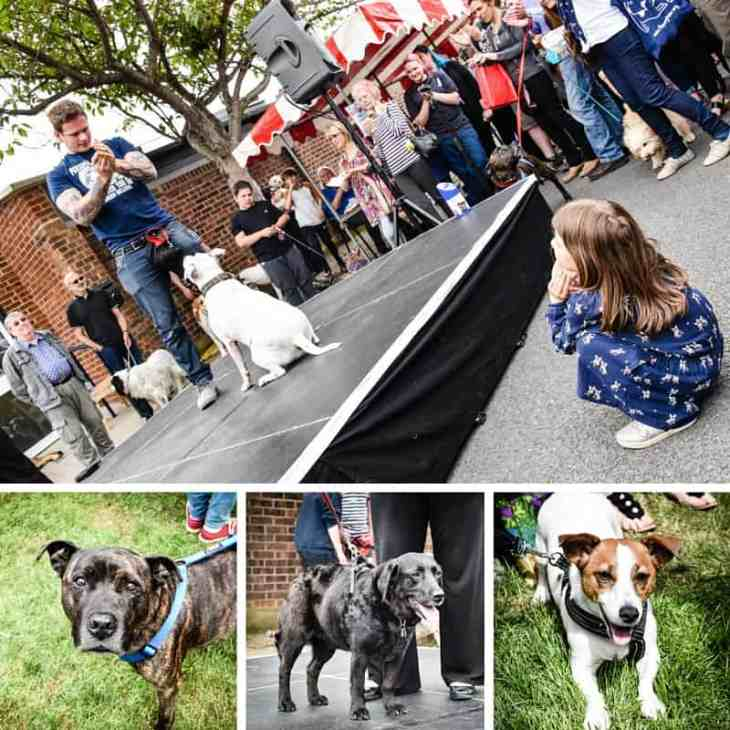 The Mayhew Animal Home - Happily Rehomed