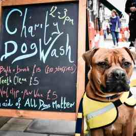 Barkers of Muswell Hill FI - London Dog Rescue