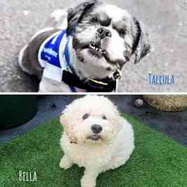 Tallula and Bella: Two Blind Dogs