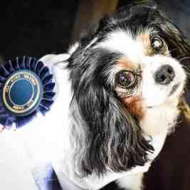 (FI) Pup Idol 2016