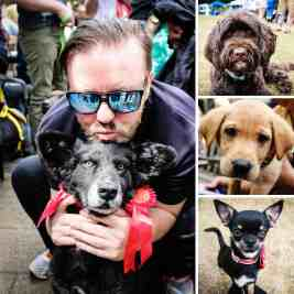 What's On Woofs - London Dog Events July - FI
