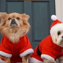 fb-uk-dogs-celebrating-christmas-1