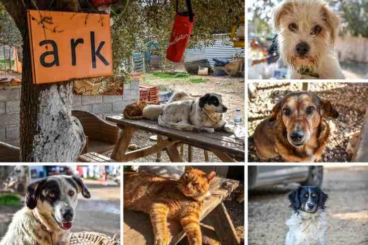 Animal Rescue Kefalonia Volunteering 1
