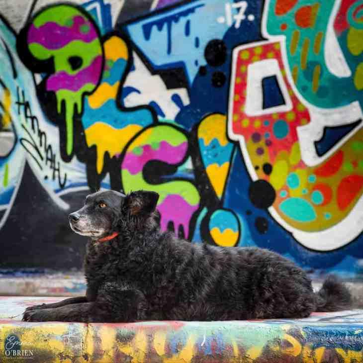 Belinha London Dog Photo Shoot with Emma OBrien_0171
