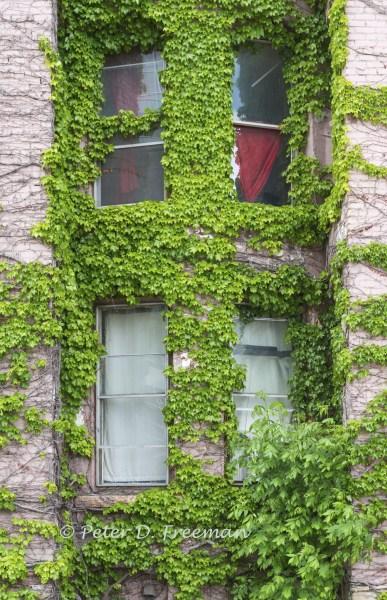 Curtains and Shades