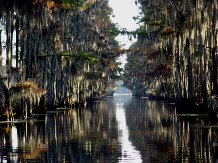 caddo-lake