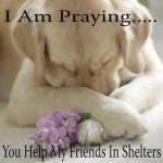 Prayer-for-Shelter-Dogs