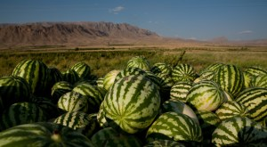 Melons in Armenia