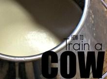 train a cow 3