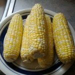 Bt Sweet Corn via thefarmerslife.com