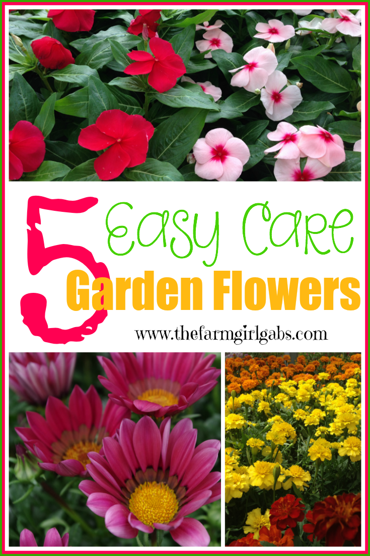 Five easy care garden flowers for Easy maintenance plants and flowers
