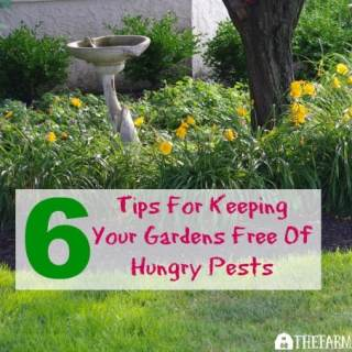 Six Tips For Keeping Your Gardens Free Of Hungry Pests. #ad
