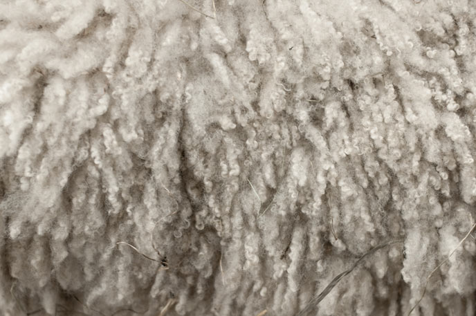 Merino wool fibres of less than 15 microns
