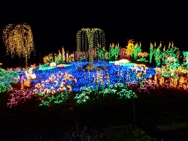 6 things to do in seattle this christmas fashion to follow for Bellevue botanical garden lights