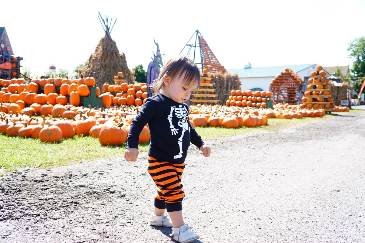 Hello Fall! A Visit to the Pumpkin Patch