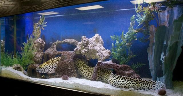 Fish Aquarium and Fish Tank Design, Installations, and Maintenance for