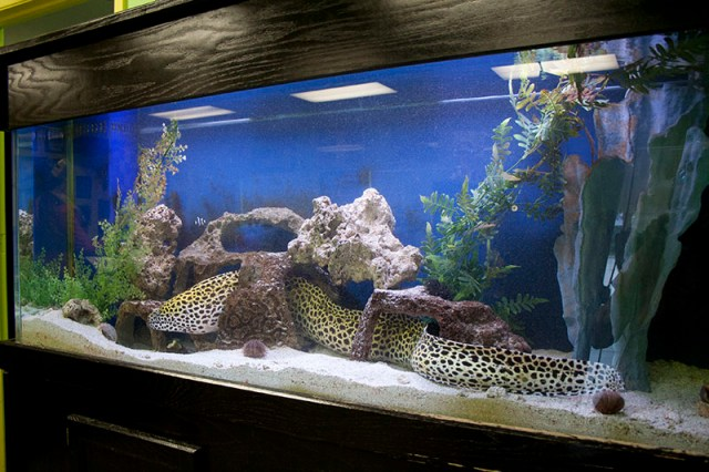 concierge fish aquarium fish tank service sarasota florida 6