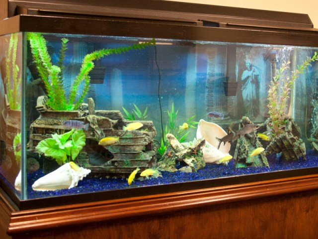 Fresh Water Fish Tank Designs and Installations for Custom Fish Tanks