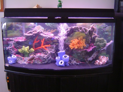 Contractor S Saltwater Aquariums – The Fish Guy | Pond Maintenance