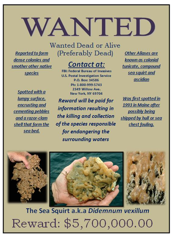 Invasive Species - Seventh Grade Science - example of a wanted poster