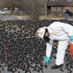 1000s of blackbirds drop from sky in Arkansas