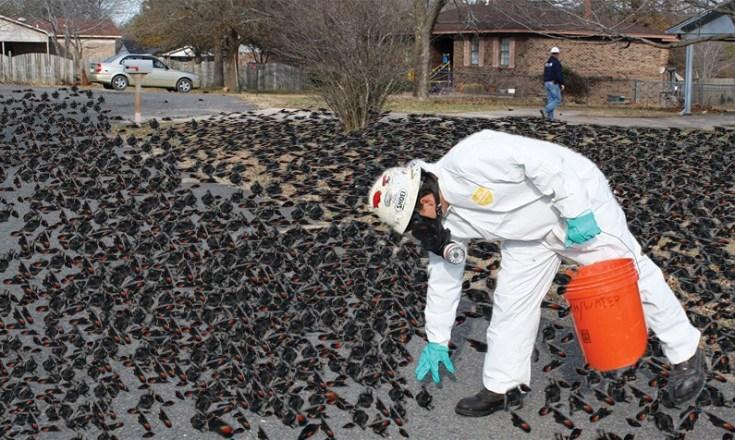 strange bird deaths