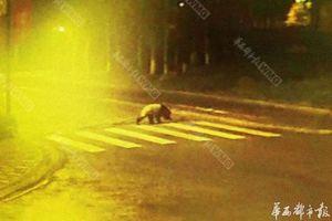 weird panda news