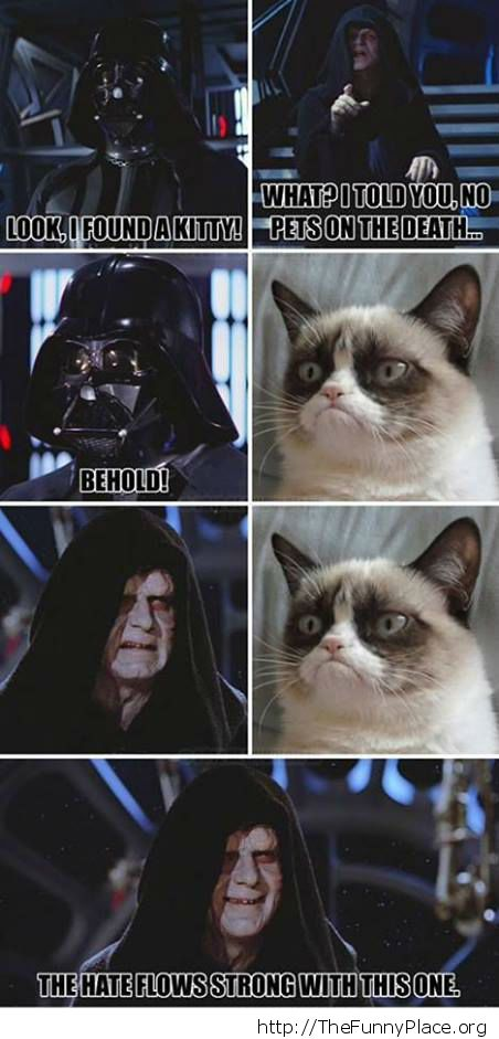 Grumpy Cat Wallpaper Quotes Grumpy Cat Thefunnyplace