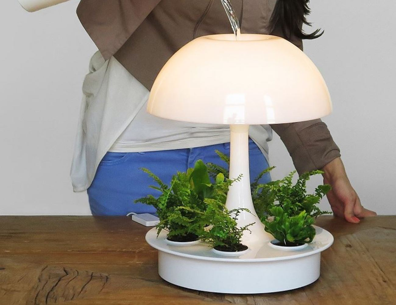 Lamp Plant Sagegreenlife Ambienta Living Table Lamp