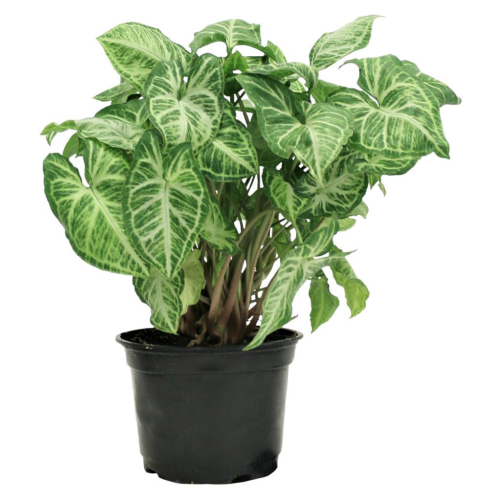 Indoor Plants For Low Light 15 Best Low Light Indoor Plants