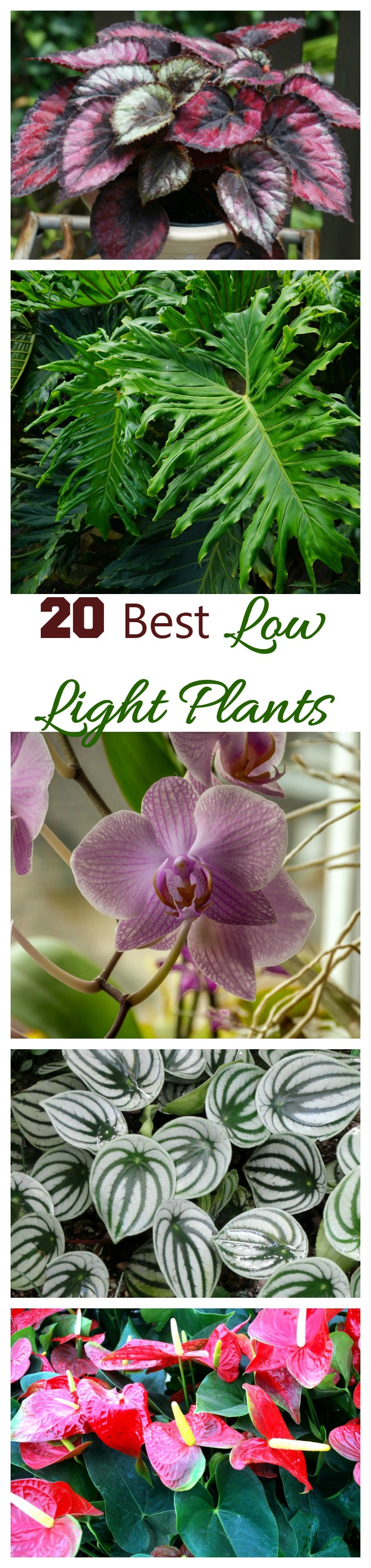 Indoor Plants For Low Light Low Light Indoor Plants House Plants That Thrive In Lower Light