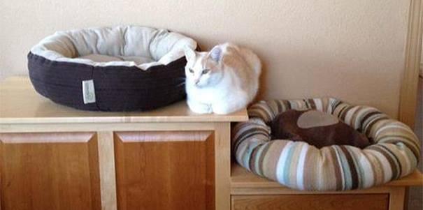 kedi yatacak yer