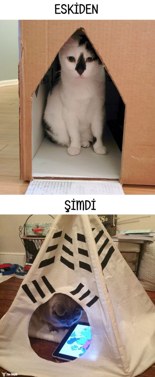 cats-then-now-funny-technology-change-life-20-571625ec249b3__700