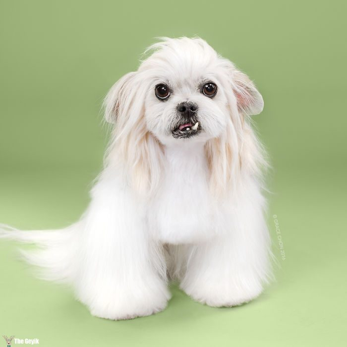 HAIRY-before-and-after-transformations-of-dog-haircuts-5794202062053__700