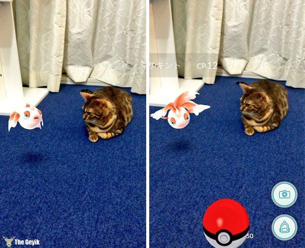 hayvanlar pokemon go görebiliyor 10
